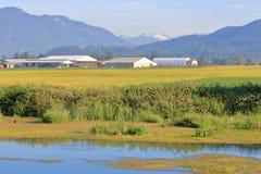 农业和独特的生态系 库存图片
