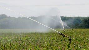 农业喷水隆头浇灌的玉米田 免版税图库摄影