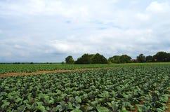 农业在德国 免版税库存照片