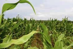 农业在德国 库存照片