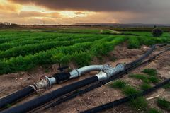 农业在日落的灌溉管子 免版税库存照片