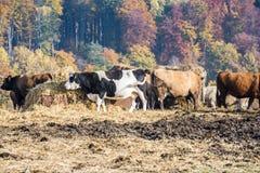 农业在梅克伦堡福尔波门 库存照片