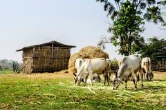 农业在泰国的农村生活中 库存照片