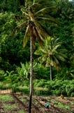 农业在Aitutaki盐水湖库克群岛 库存图片