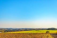 农业场面:农场和清楚的蓝天的风景 库存照片