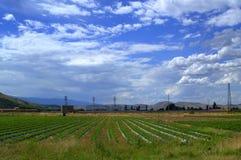 农业夏天视图 库存图片