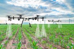 农业对被喷洒的肥料的寄生虫飞行在麦地 库存照片