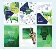农业小册子布局设计 母牛的多角形画象 几何构成 一套横幅 库存例证