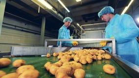 农业工作者在工厂切土豆 股票录像