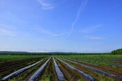 农业庄稼的耕种 免版税库存图片