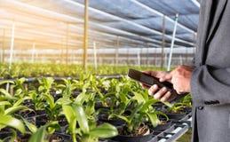 农业技术概念使用片剂的人农艺师  库存照片