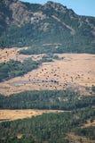 农业拖拉机 免版税库存照片