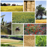 农业拼贴画 免版税库存图片