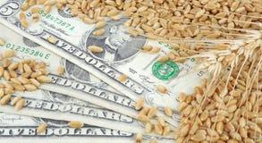 农业收入 免版税图库摄影