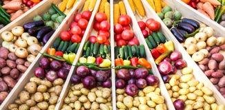 农业收获了各种各样的新鲜蔬菜在f 免版税库存图片