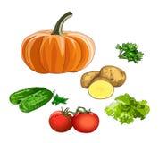 农业新鲜市场产品蔬菜 健康饮食的维生素 向量 免版税库存照片