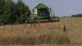 农业机械收获组合工作捶打麦地前面  股票录像