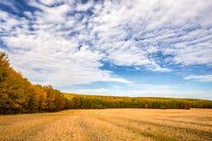农业树木丛生的乡下秋天风景 免版税图库摄影