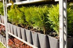 农业植物群托儿所,庭院植物学植物出售 免版税库存照片