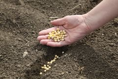 农业概念 库存图片