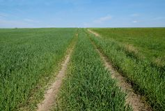 农业横向 在谷物中的一条土路 库存照片