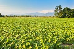 农业横向 大豆的领域 免版税库存图片