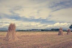农业横向 捆麦子 免版税库存图片