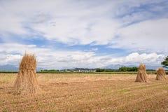 农业横向 捆麦子 免版税图库摄影