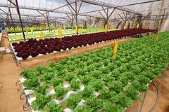 农业水耕的种植园 免版税库存图片