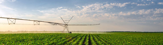 农业灌溉系统浇灌的麦地晴朗的夏天 图库摄影