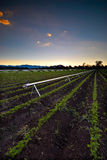 农业灌溉 库存照片