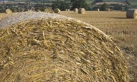 农业玉米田haybales横向 免版税库存照片