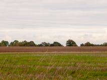 农业生产调遣在前面的棕色白色天空绿色领域 免版税库存照片