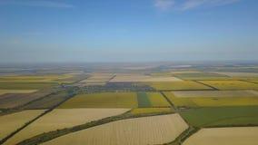 农业田地庄稼鸟瞰图收获,染黄农业种植园寄生虫射击 股票视频