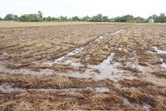 农业的光秃的土地在侵蚀过程中在泰国 库存照片