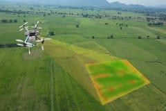 农业的,各种各样的领域的寄生虫用途寄生虫 图库摄影