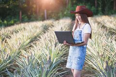 农业研究员学习菠萝pl成长  免版税库存图片
