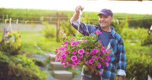 农业确信的男性花匠审查的盆的花植物 影视素材