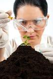 农业科学家测试在实验室 免版税库存照片
