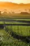 农业米领域风景01 免版税库存照片