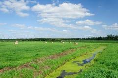 农业美好的干草横向卷 图库摄影