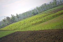农业耕种种田 免版税库存图片