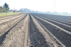 农业背景领域 免版税库存图片