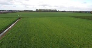 农业自然领域,荷兰鸟瞰图  股票视频