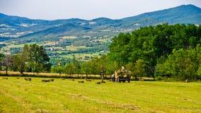 农业领域和风景在Zlot山附近 库存照片