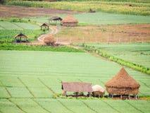 农业领域在乡下 库存图片