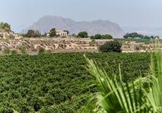 农业领域在阿尔戈法村庄 西班牙 免版税库存图片