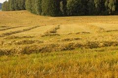 农业领域用二面对切的麦子 免版税库存照片