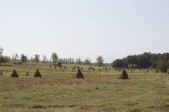 农业领域用玉米 在农田的玉米大包 免版税库存图片