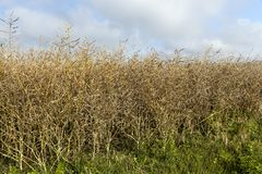 农业领域,夏天 库存照片